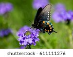 Pipeline Swallowtail On A...
