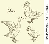 Ducks And Duckling Set  Sketch...