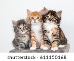 Stock photo three cute kittens 611150168