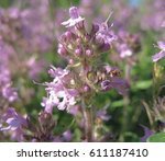 wildflowers close up. thyme | Shutterstock . vector #611187410