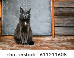 Stock photo russian blue cat kitten with green eyes resting on porch of an old village rustic house 611211608