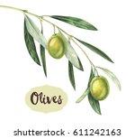 watercolor green olive branch | Shutterstock . vector #611242163