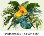 vector tropical  composition... | Shutterstock .eps vector #611245454