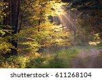Autumn Landscape Road Through ...