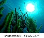 underwater sunlight | Shutterstock . vector #611272274