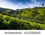 tea plantations near nuwara... | Shutterstock . vector #611328563