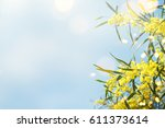 blooming mimosa branches... | Shutterstock . vector #611373614