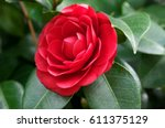 Lose Up Of Red Flower Of...