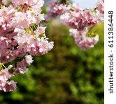 Spring Pink Flowers  Prunus...