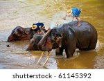 Elephant  Wildlife  Chiangmai...