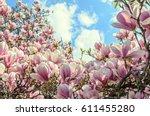 Magnolia Pink Blossom Tree...