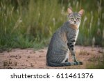 close up  african wildcat ... | Shutterstock . vector #611461376