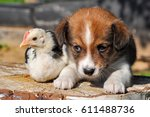 puppy and chicken for easter | Shutterstock . vector #611488736