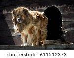 Big Security Shepherd Dog In...