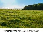 herd of cattle grazing in a...   Shutterstock . vector #611542760