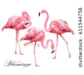 tropical bird flamingos. vector. | Shutterstock .eps vector #611544758