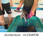 turtles in tortoise breeding... | Shutterstock . vector #611568938