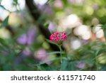 flower | Shutterstock . vector #611571740