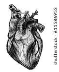 anatomical heart   Shutterstock . vector #611586953