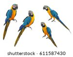 A Collection Of Parrot Macaws...