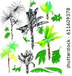 tropical palm trees and leaves  ...   Shutterstock .eps vector #611609378