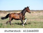 beautiful bay horse running... | Shutterstock . vector #611666000
