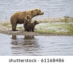 Stock photo let me see a grizzly bear cub stands up to get a better look in katmai national park alaska 61168486