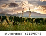 Wild Grasses During Sunset In...