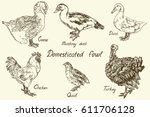 domesticated fowl set  goose ... | Shutterstock .eps vector #611706128