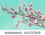 Flowers On The Tree. Blossom...