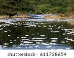 foam of pollution on the tiete... | Shutterstock . vector #611738654