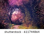 summer landscape with footpath...   Shutterstock . vector #611744864