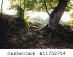 the forest is in italy | Shutterstock . vector #611752754