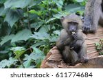 baboon youth sitting on log... | Shutterstock . vector #611774684
