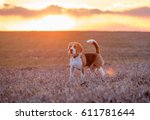Dog Portrait Beagle On A Sprin...