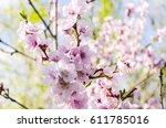 beautiful spring blossom flowers | Shutterstock . vector #611785016