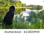 Hunting Dog In The Pond Hunts....