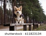 a dog stands on a bench on a... | Shutterstock . vector #611823134