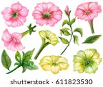 watercolor set of pink and... | Shutterstock . vector #611823530
