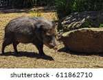 american pigs peccaries in the... | Shutterstock . vector #611862710
