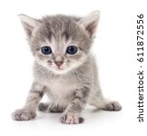 Stock photo small gray kitten isolated on white background 611872556