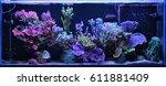 Dream Coral Reef Aquarium Tank  - stock photo