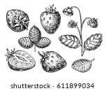 strawberry vector drawing set.... | Shutterstock .eps vector #611899034