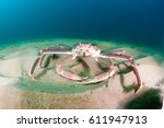 Snow Crab  Opilio Crab  On The...