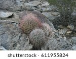 barrel cacti growing near palm... | Shutterstock . vector #611955824
