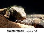 komodo dragon resting with...   Shutterstock . vector #611972