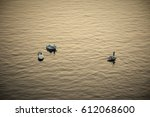 the river with swans. a... | Shutterstock . vector #612068600