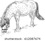 sketch of a grazing pony | Shutterstock .eps vector #612087674