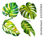 tropical hawaii leaves palm... | Shutterstock . vector #612154364