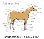 Parts Of Horse. Equine Anatomy...